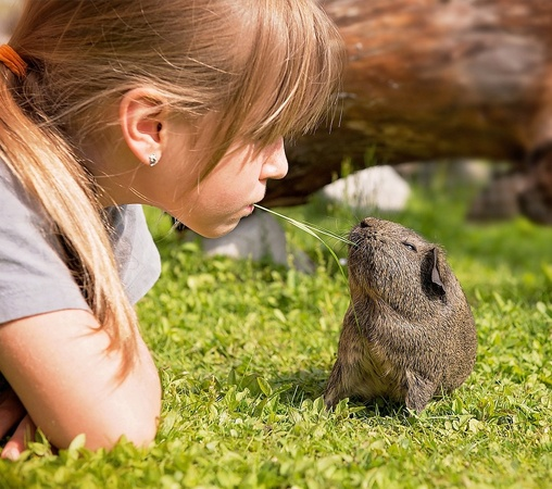 girl-outside-with-guinea-pig.jpg