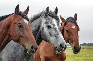 horses-1414889_640.jpg