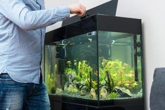 man feeding fish in an aquarium