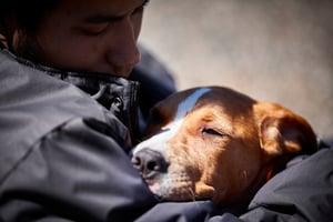 sleepy-service-dog